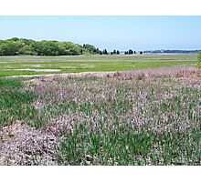 Wellfleet Bay Wildlife Sanctuary Photographic Print
