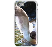 Black-headed gull (Chroicocephalus ridibundus) iPhone Case/Skin