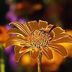 Copper Daisy by Teresa Zieba