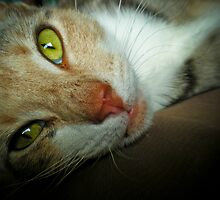 123 - Look into my Eyes! by clydeessex