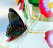Butterfly on Hummingbird Feeder by wolfepaw