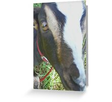 Get Outta My Face! Greeting Card