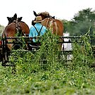 Amish Fields #3 by Monte Morton