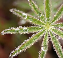 Dewy Morning by Debbie  Roberts