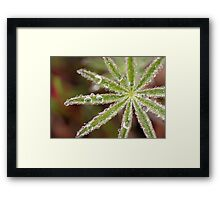 Dewy Morning Framed Print