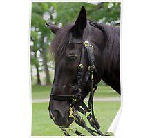 Beautiful Black Horse Poster