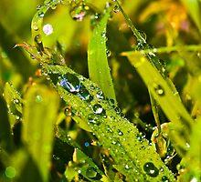 Acid Grass. by Sherstin Schwartz