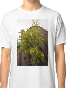 Beautiful Golden Chain Tree in Full Bloom Classic T-Shirt