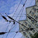house web by armadillozenith
