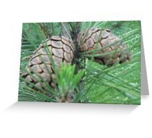 Pine Cones #2 Greeting Card