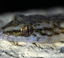 Gecko by Macky