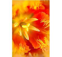 Orange Passion. Tulip Macro Photographic Print
