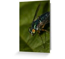 Dolichopus - Looking at you Greeting Card