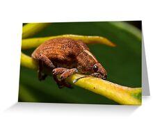 Eucalyptus Weevil #2 Greeting Card