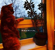 Another cat? by HeklaHekla