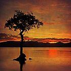 The beauty of an evening by Lynn Benson