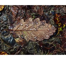 Oak Leaf Photographic Print