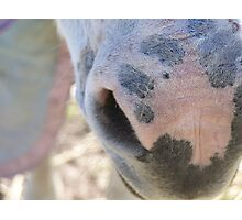 The Donkeys Nose Photographic Print