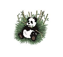 Panda Bear Photographic Print