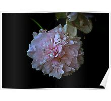 fading peony Poster