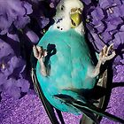 Mr Blue Birdie does purple. by thedebbes
