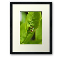 """""""I'm a Stink Bug, What are You?"""" Framed Print"""