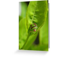 """""""I'm a Stink Bug, What are You?"""" Greeting Card"""