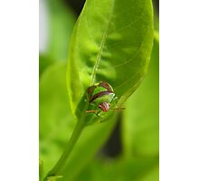 """I'm a Stink Bug, What are You?"" Photographic Print"