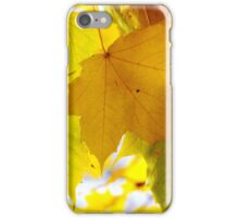 Maple Leaves in Autumn Glory iPhone Case/Skin