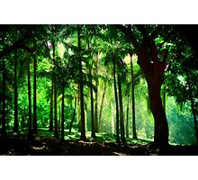 Light in the Jungles. Viridian Greens. Mauritius Photographic Print