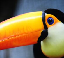 What Did You Say? Toco Toucan Sticker