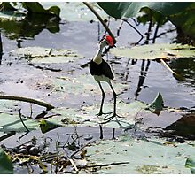 Jacana & Eggs Photographic Print