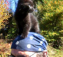 Iddy Biddy Kitty by vigor