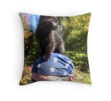 Iddy Biddy Kitty Throw Pillow