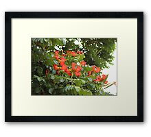 Red Flower Blossoms on a Tree Framed Print