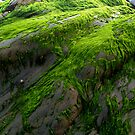 Velvet Green Sea Moss by Simon Groves