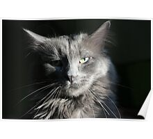 Smokey Whiskers Poster