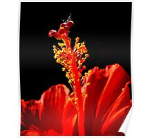 Fiery Hibiscus Poster