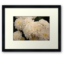 white aster Framed Print
