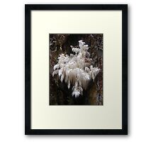 Hericium coralloides. Spine Fungi. Framed Print