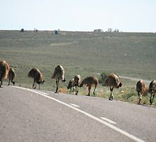 Road Block, Flinders Ranges, South Australia. by elphonline