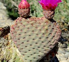 The Love Cactus by JosephClayton