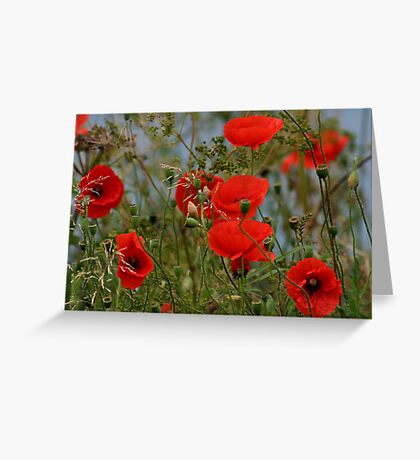Common Red Poppies Greeting Card