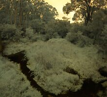 LeFroy Brook, Pemberton, Western Australia by BigAndRed