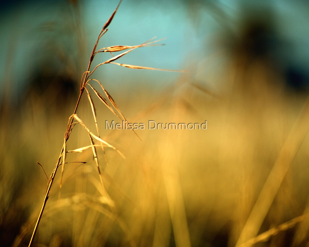 Perfectly lonely by Melissa Drummond