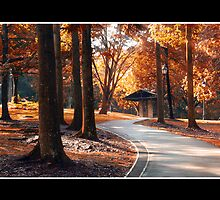 The Path. by ZaQQy J