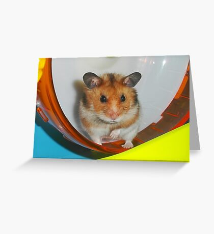 Barney,  the Hamster Greeting Card