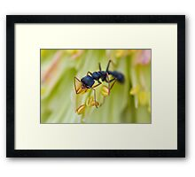 Ant on a Red Hot Poker Framed Print