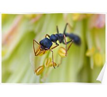 Ant on a Red Hot Poker Poster