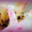 Seeds of a Rose .............. by lynn carter